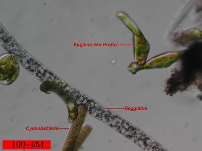 Hacia una biblioteca nacional de la vida microscópica